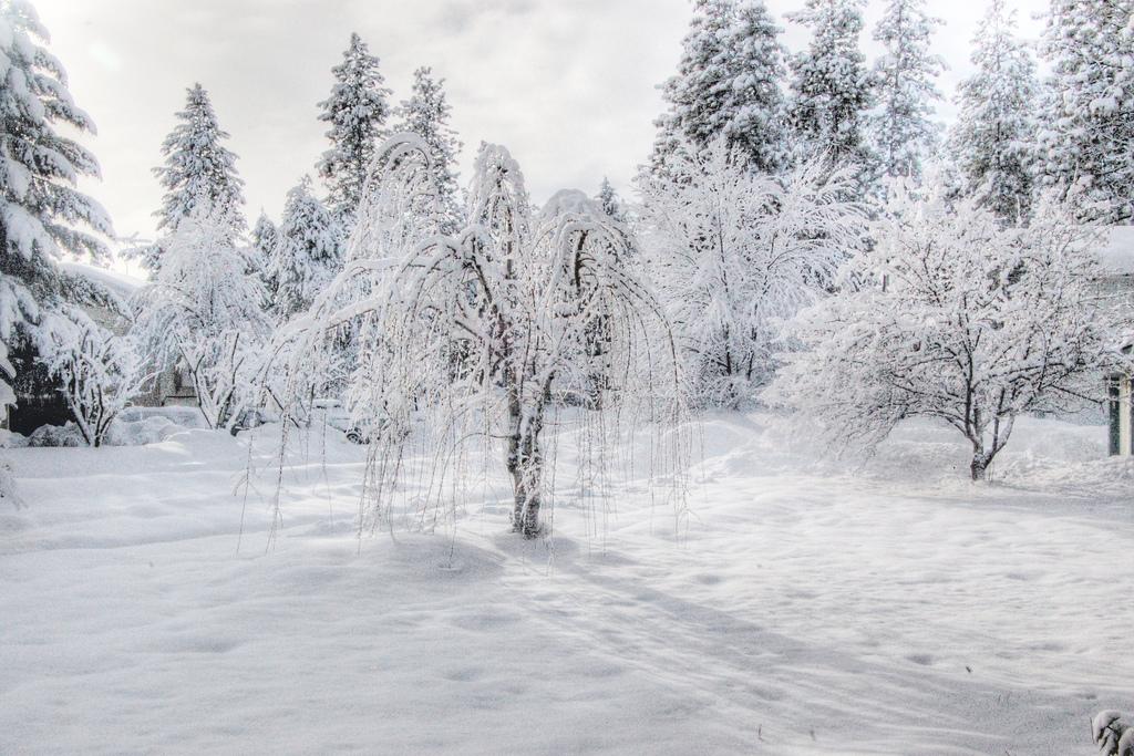 snow layer