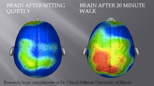 brain.after .walk